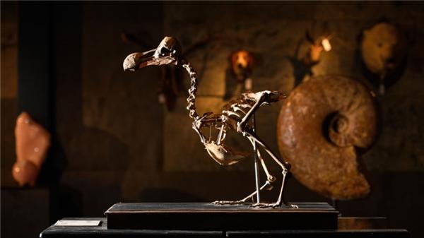 Bộ xương gần như hoàn chỉnh được ngã giá nửa triệu đô.