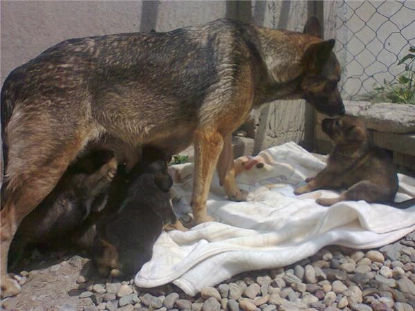 Bàng hoàng nhận ra sự thật về cô chó nằm canh mộ chủ không rời