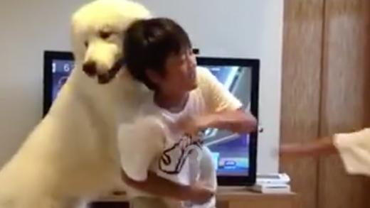 Chết cười với chú chó làm