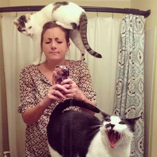 """Từng nghe, """"Chó ngáp phải ruồi"""". Nay mới thấy, mèo ngáp phải quả ảnh selfie."""