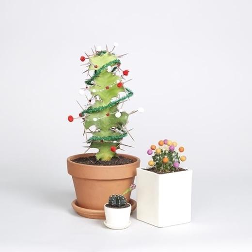 Mua về vài chậu cây cảnh tí hon, sau đó dùng nhíp để trang hoàng cho các chậu cây be bé.Thế này thì dù có hết mùa Giáng sinh cũng không cần dọn dẹp cây thông đâu nhỉ!