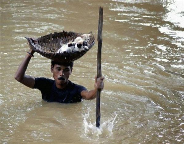 #9 Không ngại nguy hiểm, một người dân làng đã xông pha cứu những chú mèo con này trong trận lụt lịch sử ở thành phố Cuttack, Ấn Độ vào năm 2011.(Ảnh: Life Buzz)