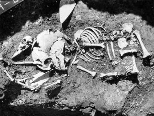 Nhiều mảnh xương chim được tìm thấy. (Ảnh: internet)