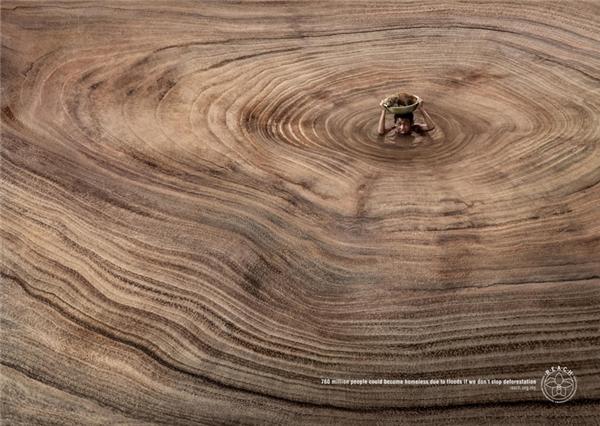 Nếu không ngừng tàn phá rừng, sẽ tiếp tục có thêm hàng triệu người sống chung với lũ.