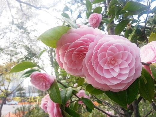 """Bạn hiểu tại sao có cách ví von """"đẹp như hoa"""" rồi chứ?"""