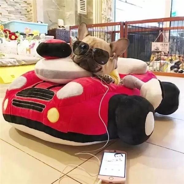 Việc nhà vừa xong thì bố pug liền tranh thủ sạc pin điện thoại rồi xem lại xe cộ để chở vợ con đi hóng mát.