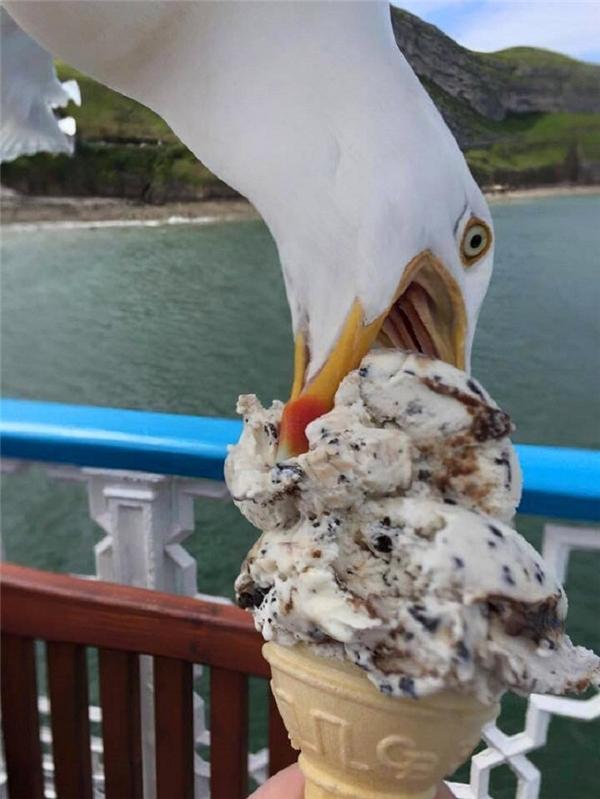 Đang chuẩn bị chụp ảnh que kem thì bị ông thần này photobomb. Kết quả, mất luôn que kem.