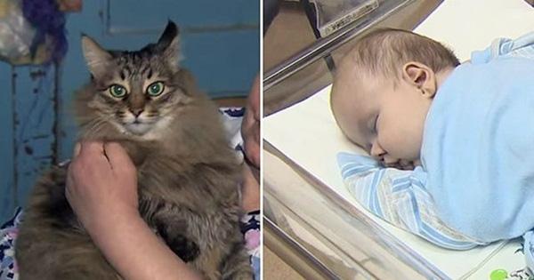 Đứa bé sống sót nhờ hơi ấm của một chú mèo hoang.(Ảnh: Internet)