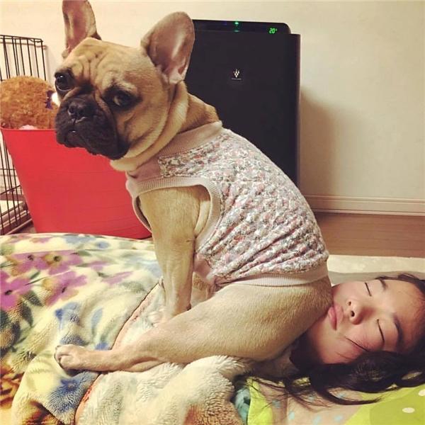 """Lại thêm chú chó """"like a boss"""" khiến netizen không nhịn được cười"""