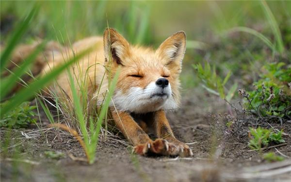 Ngủ cả ngày mỏi mệt ghê ha!