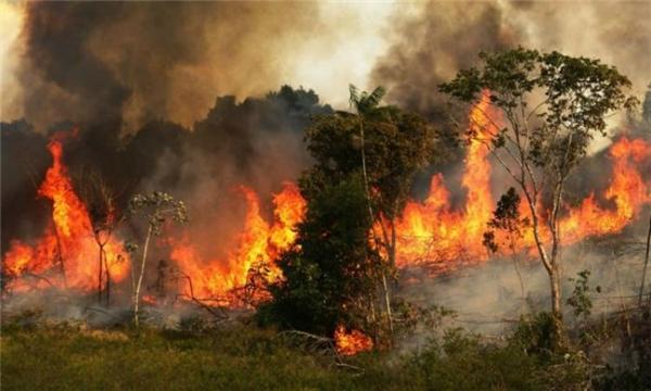 Đất trống, đồi trọc, lũ lụt càn quét vì đốt phá rừng. (Ảnh: Wittyfeed)