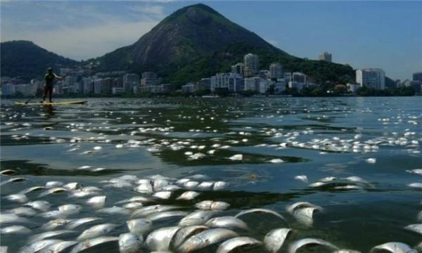 Hàng nghìn xác cá chết trên mặt vịnh Rio. (Ảnh: Wittyfeed)