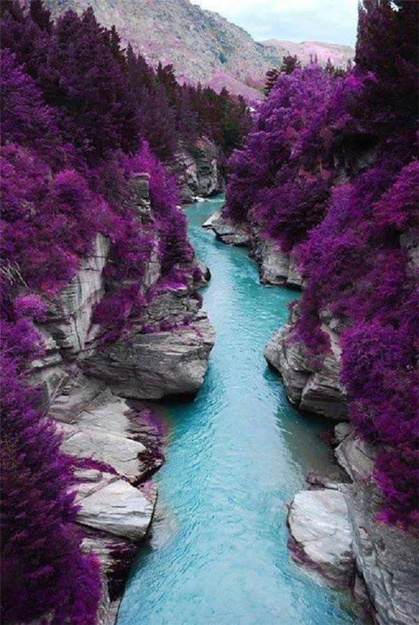 Dòng sông xanh thẳm màu trời với hai vách đá phủ đầy hoa tím đã khiến dân mê du lịch phải nhao nhao lên truy lùng cho ra.