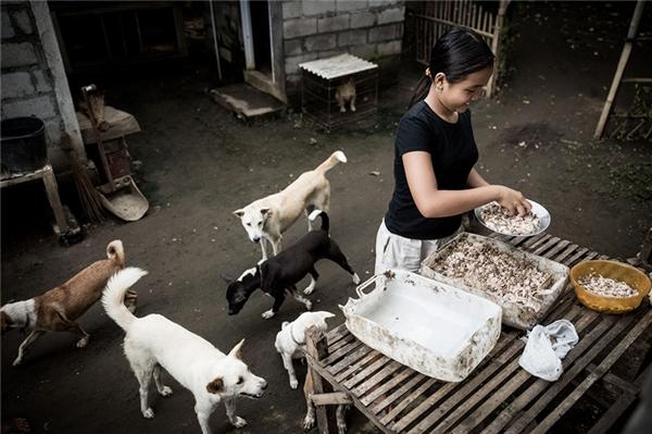 Hiện tại gia đình em được một tổ chức cứu trợ động vật ở Bali hỗ trợ thức ăn cho chó.