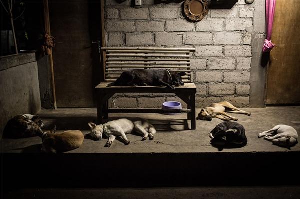 Bầy chó tập trung ngủ trước phòng cô bé, ban ngày chúng có thể rong chơi khắp nơi nhưng đêm xuống đều trở về nơi mà từ nay sẽ lànhà của chúng.