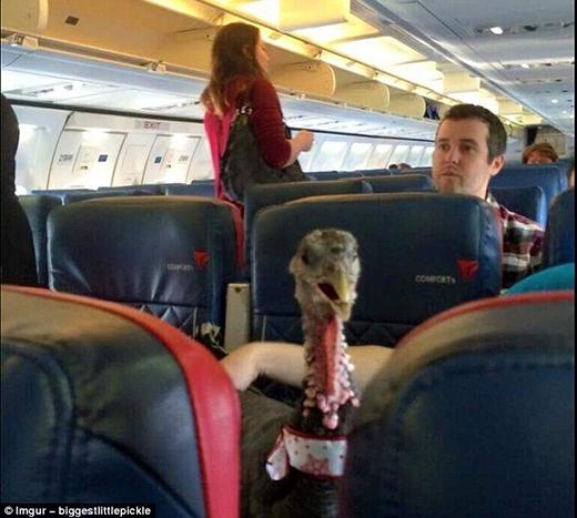 Con gà điên kia mày có cánh sao không tự bay đi lại leo lên máy bay người khác làm gì hả?