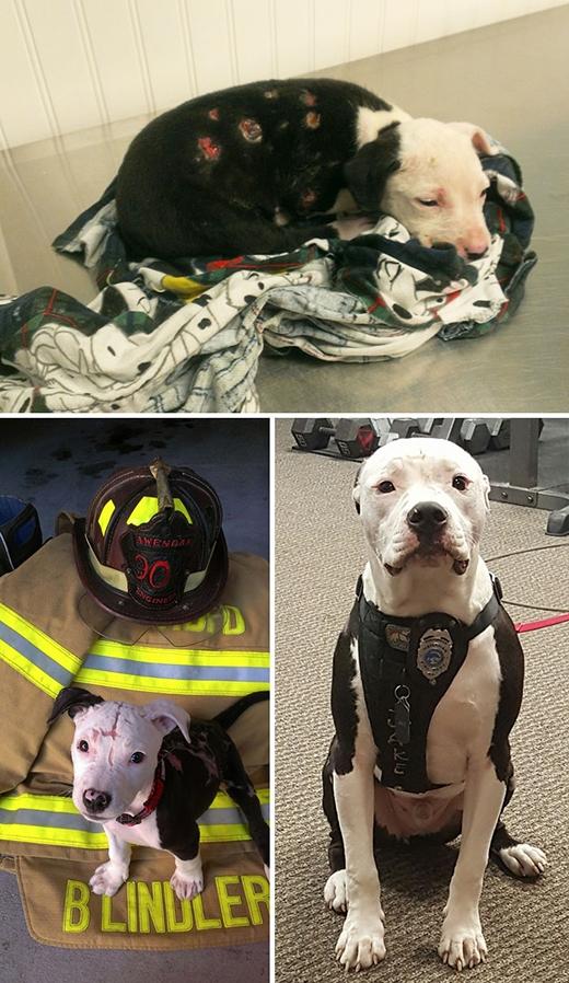 Khoảnh khắc xúc động của những chú chó trước và sau khi được giải cứu