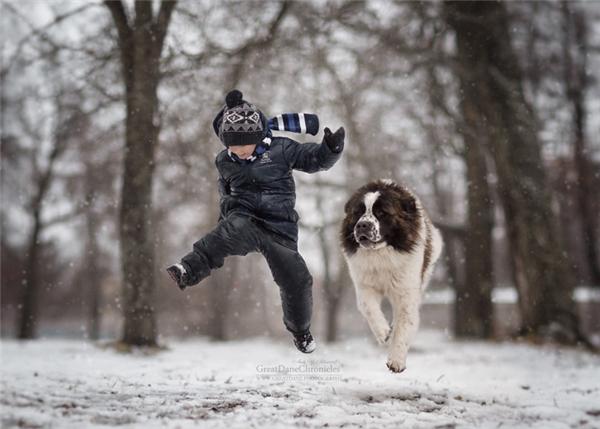 Ngộ nghĩnh những em bé tí hon chơi đùa cùng chó khổng lồ