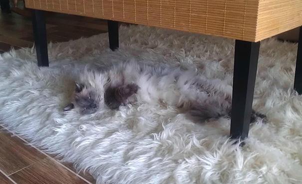 Hình như tấm thảm này phát ra tiếng kêu thì phải?