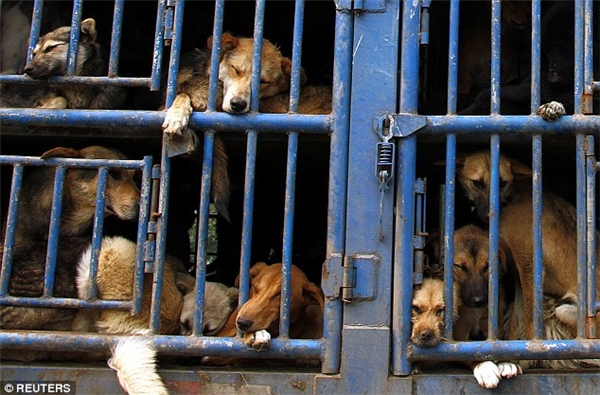 """Bà Mimi Bekhechi, Giám đốc phụ trách các chương trình quốc tế của Tổ chức Bảo vệ Quyền lợi Động vật PETA cho biết:""""Cần nhanh chóng tìm gia đình phù hợp cho những chú chó trên, đồng thời chúng cũng cần nhận được chăm sóc y tế ngay lập tức. Có lẽ một tổ chức thú y quốc tế nào đó nên tới đây để xử lý tình hình đáng lo ngại này."""""""