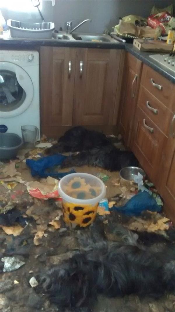Hình phạt thích đáng cho kẻ bỏ đói hai chú chó đến chết