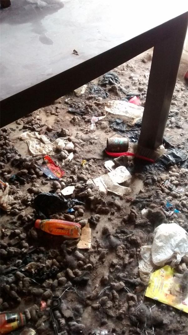 90% ngôi nhà tràn ngập rác, cửa đóng kín, không có thức ăn nước uống, làm sao hai chú chó có thể sống sót? (Ảnh: Mirror)