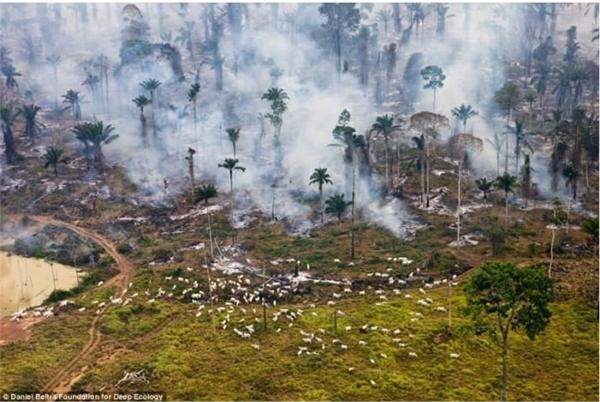 Rừng nhiệt đới chìm trong biển khói và lửa. Bên dưới là những con dê đang gặm cỏ, không hề nhận thức được hiểm nguy cận kề.