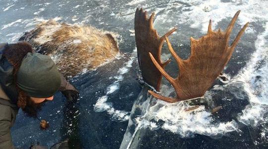 Với thời tiết khắc nghiệt kéo dài, thì tình trạng động vật đóng băng không phải chuyện hiếm hoi. (Ảnh: EPA)