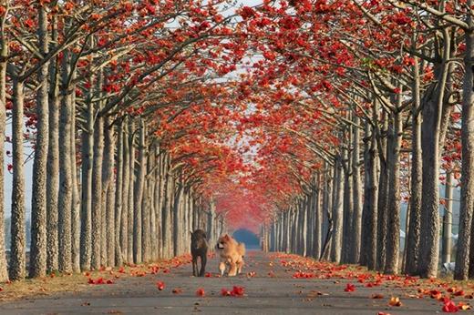 Lạc lối trước 10 con đường hoa đẹp như