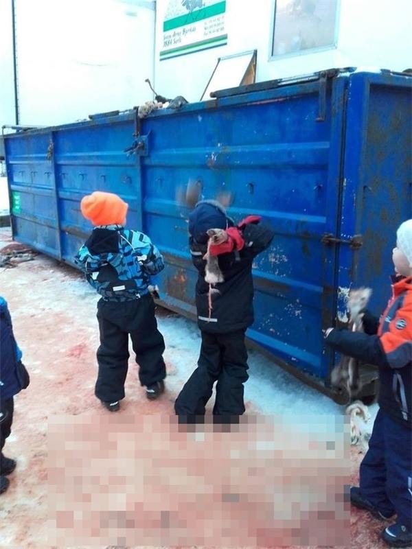 Những đứa trẻ không chỉ chứng kiến mà còn tham gia vận chuyển tuần lộc lên xe.