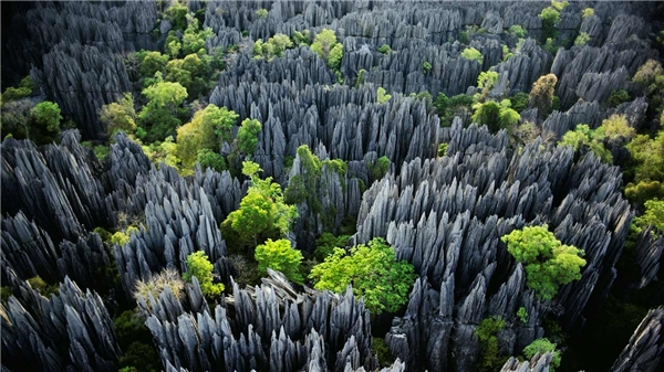 Rừng đá Tsingy nằm trong công viên quốc gia Tsingy de Bemaraha của Madagasca, một trong những di sản thế giới được UNESCO công nhận. Nơi đây nổi tiếng với những tháp đá nhọn hoắt, lởm chởm có nơi cao tới 50m.
