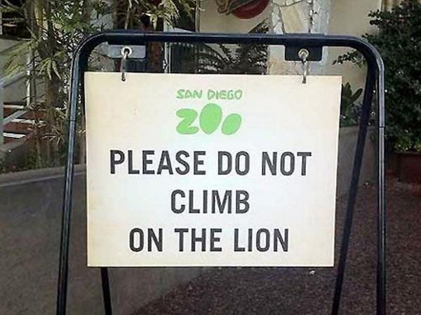 Cấm leo lên lưng sư tử