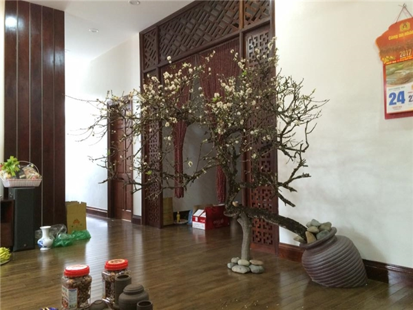 Ngoài đào, quất, nhiều gia đình cũng lựa chọn những loại cây cảnh khác để trang trí gia đình trong dịp Tết Nguyên Đán.