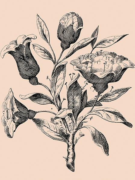 Có 6 gương mặt ẩn trong bức hình đóa hoa hồng này.