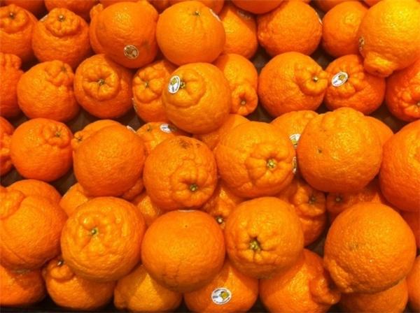 """Khi những quả cam được gắn """"mông giả""""."""