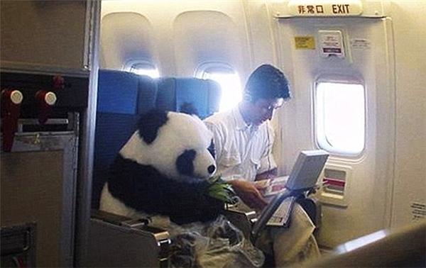 Vị hành khách đáng yêu nhất mà tôi từng gặp trên máy bay.