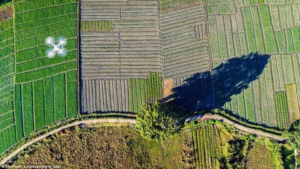 Quang cảnh một cánh đồng ở Trung Quốc của tác giả Lingdamowang giành giải ba tại hạng mục nhiếp ảnh gia nghiệp dư.