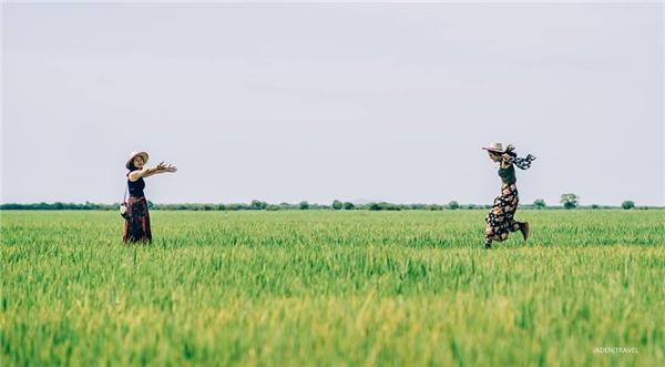 Cánh đồng lúa bao la trên đường đi Biển Hồ Tonle Sap.