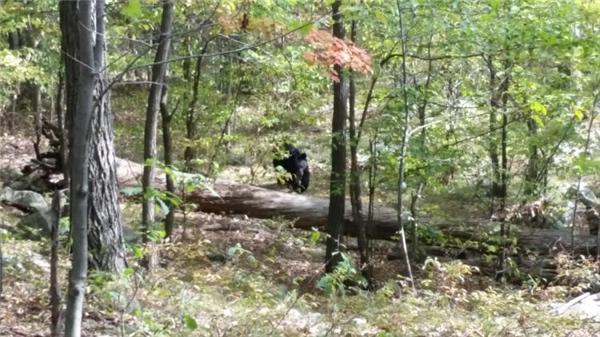 Bức ảnh con gấu được một người leo núi chụp được ở New Jersey. Chỉ vài phút sau, người này bị chính con gấu đó vồ chết.