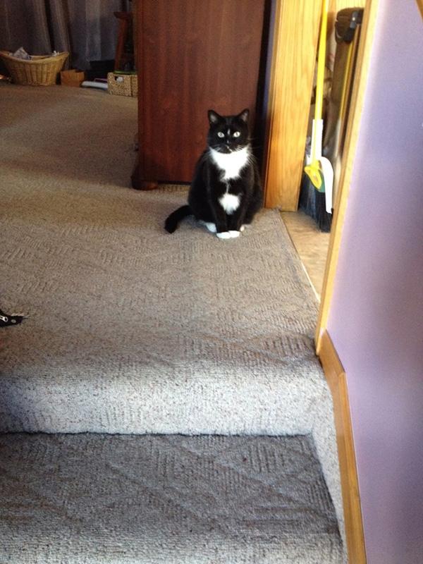 Động vật có hành động kỳ quặc: Đôi khi chó hay mèo có những hành động vô cùng kỳ quặc, khác xa với ngày thường. Chẳng hạn chó thường vô cớ sủa vu vơ vào không khí, hoặc chúng sẽ cụp đuôi hoảng sợ hay không dám bước chân vào một căn phòng nào đó, có khi chúng còn vẫy đuôi mừng rỡ mà không có lý do. Còn mèo sẽ ngồi bất động nhìn vào một thứ gì đó trong phòng, ánh mắt rực sáng rất đáng sợ. Động vật có giác quan khác con người, chúng sẽ biết nếu trong nhà có thứ gì đó bất thường.