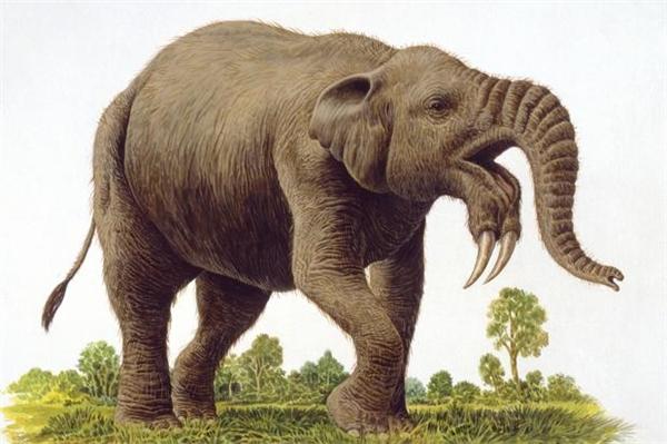 Loài Deinotherium có hình dáng giống voi ngày nay nhưng to lớn hơn và đặc biệt có cặp ngà mọc ở cằm.