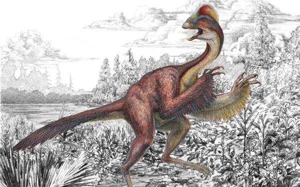 Therizinosauridae thuộc nhóm khủng long chân thú.