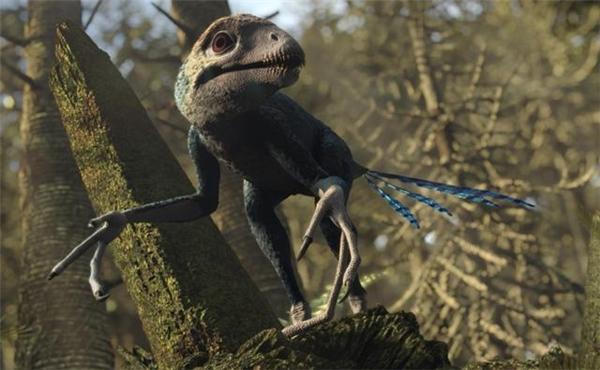 Loài Epidexipteryx.