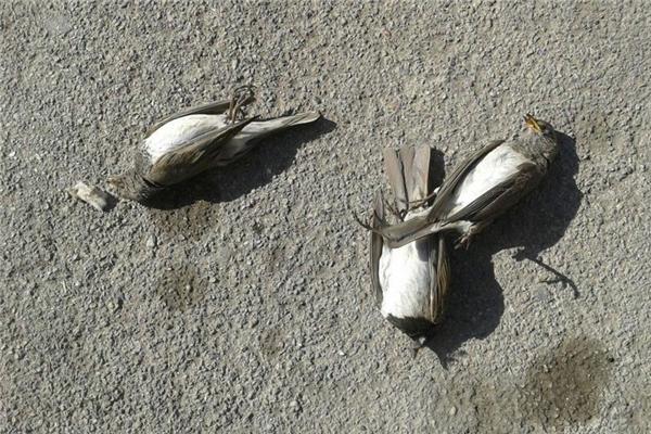 Mưa chim: Tháng 03/2010, hơn 100 con sáo đá từ trên trời rơi xuống một khu vườn ở vùng Coxley, Somerset, nước Anh, và nằm chết ngổn ngang trên mặt đất, mỏ rỉ máu và chân co quắp. Một số con còn sống thì thoi thóp thở, đập cánh yếu ớt và trông rất hoảng sợ cho đến khi người ta tiêm thuốc để chúng chết đi. Các chuyên gia nhận định bầy chim này có thể bị một con chim lớn săn đuổi và đổi hướng đột ngột, đâm đầu xuống đất. Những cơn mưa chim tương tự cũng từng diễn ra nhiều lần trên khắp thế giới.