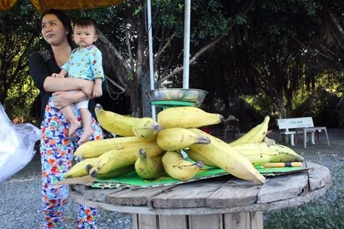 Cận cảnh cây chuối khổng lồ cao 18m, ăn một quả no nguyên ngày