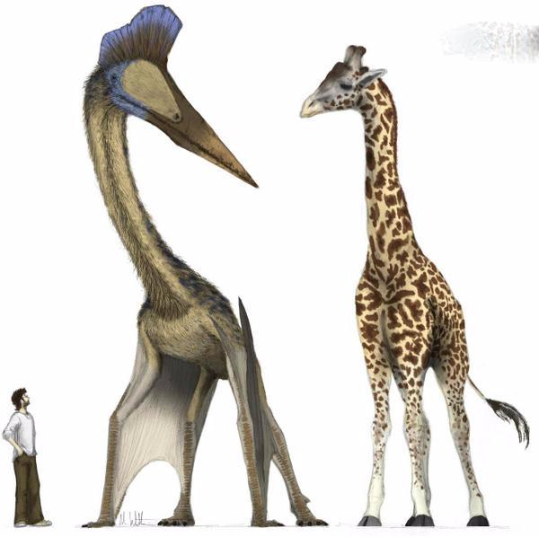 Nếu đứng thẳng, thằn lằn bay Quetzalcoatlus có chiều cao tương đương hươucao cổ trưởng thành. (Ảnh: Internet)