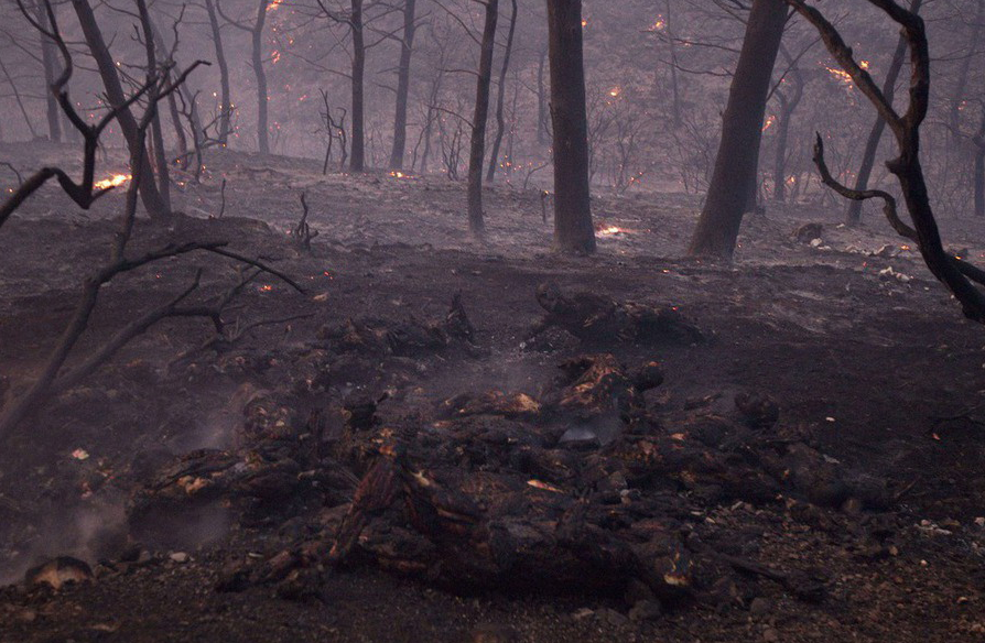Có thể ngọn lửa lan nhanh trong khu rừng trong lúc một nhóm người đang cắm trại qua đêm. Say ngủ, không ai lường trước được cái chết đang cận kề.