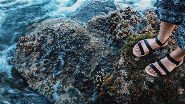 Rặng san hô thú vị ở Gành Đá Đĩa.