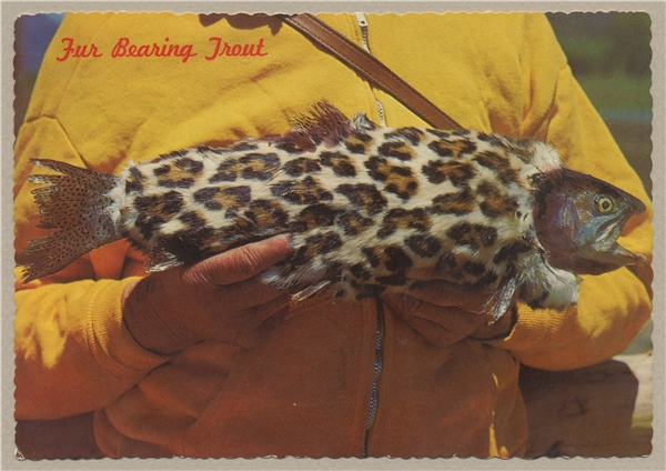 Loài cá có lông cực hiếm này đang làm đau đầu giới khoa học