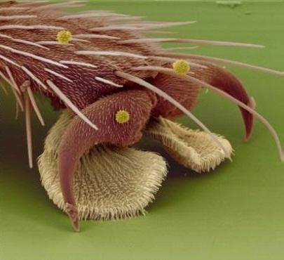Và cả chân của một con ruồi nữa?